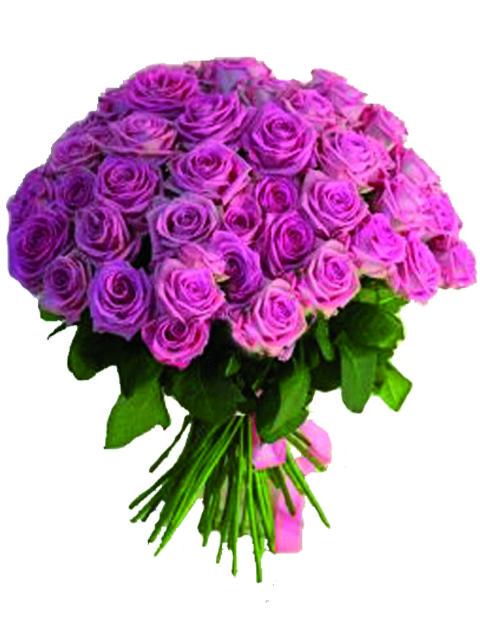 50 rose rosa