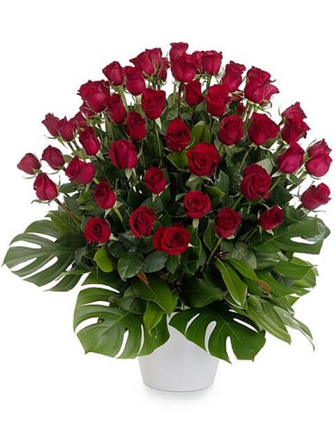 50 rose rosse medium