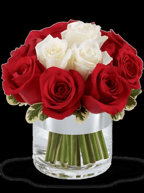 rose rosse e rose bianche