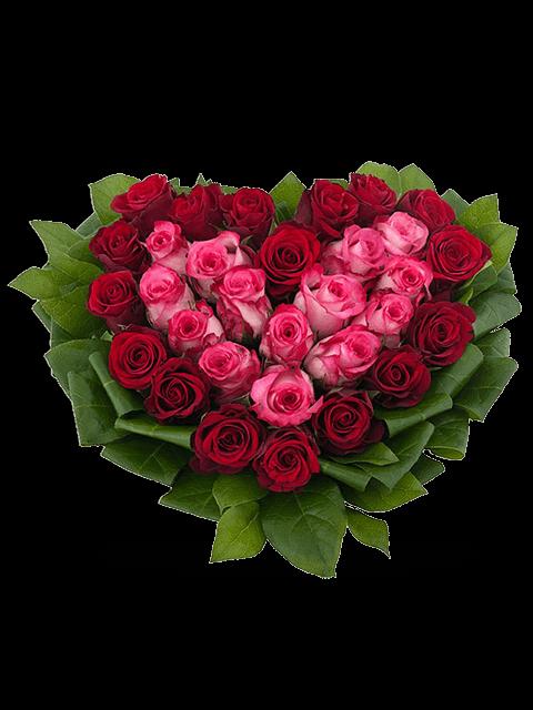 cuore rose rosse e rosa
