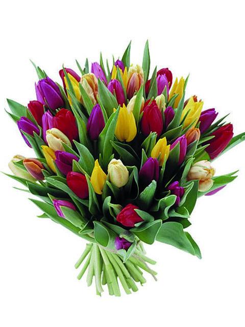 bouquet di tulipani pastello