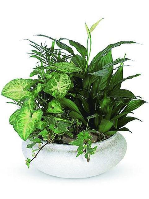 Ciotola di piante miste