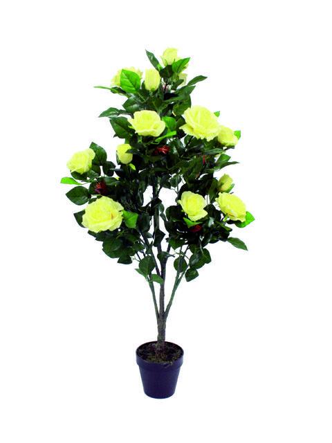 piante di rose gialle