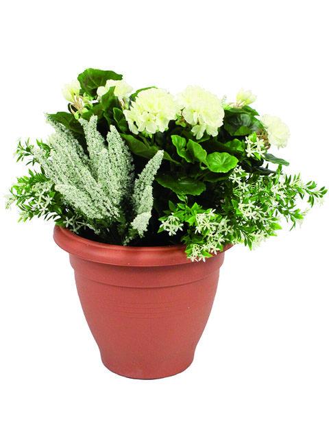 pianta di geranio bianco