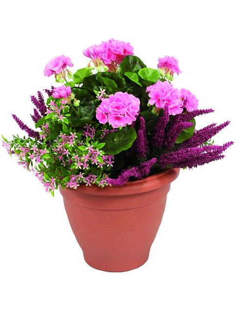 pianta di geranio rosa