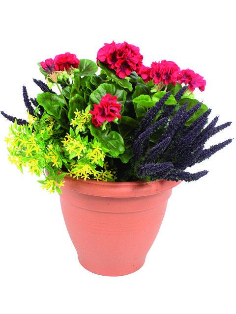 pianta di geranio rosso