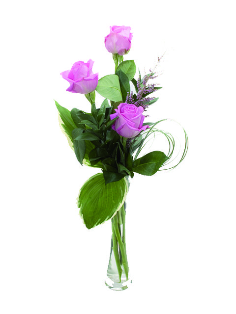 tre rose rosa