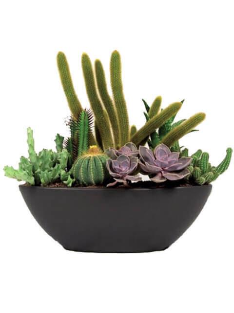 vaso di piante grasse miste